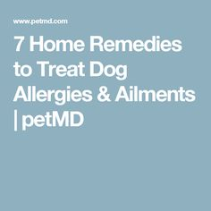7 Home Remedies to Treat Dog Allergies & Ailments | petMD #PetMd #Pet #Allergies