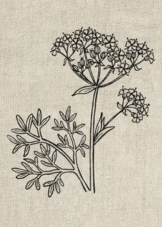 Anise Plant Vintage Clipart  Printable Digital by InstantGraphics, £1.00