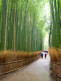 Things To Do in Kyoto: Highlights For First-Time Visitors