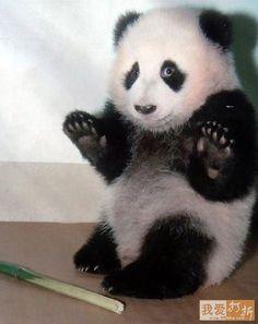 http://www.funzug.com/index.php/wildlife/enjoy-the-panda-therapy.html