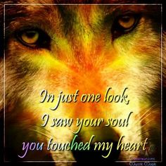 "#Wolves/Wolfs  ""In just one look, I saw your soul.. you touched my heart"""