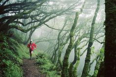 8 Great National Parks for Trail Running: Trail Running in National Parks in the USA