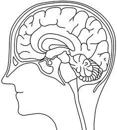 schöne Kopiervorlage zum Gehirn - keine Urheberrechte, frei runterladbar!