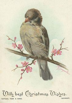 pretty gray bird with pink blossoms
