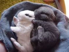 Adorable baby bunnies. Happy Easter!