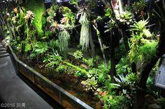 Cool Fish Tanks, Tropical Fish Tanks, Above Ground Pond, Tropical Terrariums, Outdoor Restaurant Design, Big Bush, Reptile Habitat, Aquarium Design, Reptile Enclosure