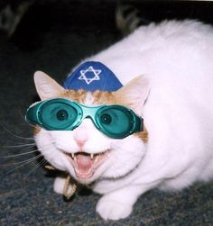 Jewish Cats, made me laugh- got to pin it Funny Cat Photos, Funny Animal Pictures, Funny Cats, Baby Animals, Funny Animals, Cute Animals, All About Cats, Cat Costumes, Christmas Cats
