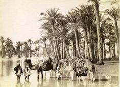 13 Iconic Photographs of Egypt - Inundation du Nil et palmiers. The New York Public Library. Photography Collection, Miriam and Ira D. Wallach Division of Art, Prints and Photographs. Old Egypt, Egypt Art, Ancient Egypt, Old Pictures, Old Photos, Vintage Photos, Life In Egypt, Le Nil, Pyramids Egypt