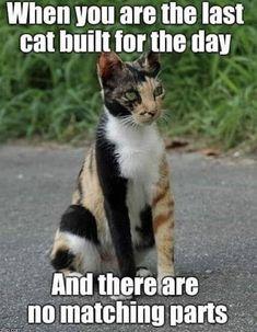 Top Laughing so Hard cat memes & grumpy cat meme Funny Animal Memes, Funny Animal Pictures, Cute Funny Animals, Cute Cats, Funny Kitties, Funny Cat Photos, Farm Pictures, Meme Pictures, Animal Humor