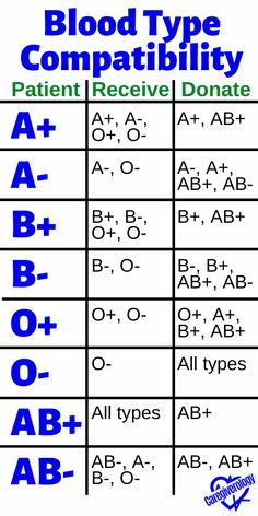 Blood Type Compatibility: Receive and Donate Medical Facts, Medical Information, Basic Anatomy And Physiology, Biology Facts, Medical Laboratory Science, Nursing School Notes, Medical Anatomy, Medical Coding, Blood Types