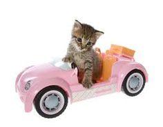 cat car - Pesquisa Google