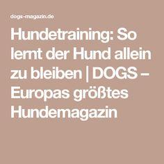 Hundetraining: So lernt der Hund allein zu bleiben   DOGS – Europas größtes Hundemagazin