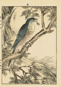 "Japanese Antique Original Woodcut Print Imao Keinen ""Red pine Japanese Paradise Flycatcher"""