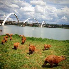 Crônica: Bichos da Cidade-Parque ~ Blog do Chiquinho Dornas