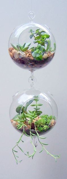 Terrarium Glass Hanging Double Hook with Succulents Vertical Gardening DIY Kit via Etsy