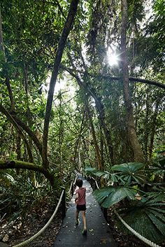 cape tribulation house, na daintree rainforest | projeto: m3 architecture | uma corda branca funciona como portão, corrimão, varal para toalhas e suporte para rede