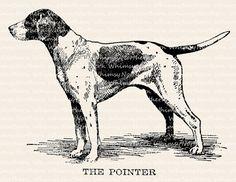 English Pointer Dog Illustration - Dog Clip Art – Dog Vintage Image - Dog Digital Stamp - Dog Printable Graphic - commercial use http://www.turmericfordogs.com/blog