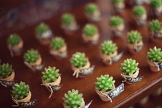Succulent wedding favors \ Succulent Wedding Flowers For All Seasons | Green Bride Guidee