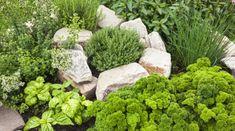 Die Würze für Ihren Garten: Kräuterbeet anlegen