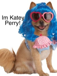 Dog version of Katey perry!
