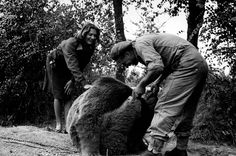 Polish soldiers enlisted an unlikely recruit when fighting in World War II: a bear. The heartwarming story of Wojtek the soldier bear, pict. My Heritage, World War, Wwii, Army, Polish, Hero, Relationship, History, Soldiers