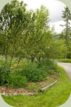 Permaculture Food Forest...great article on specific plants that work in a food forest environment