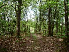 Domaine des Etangs - Forêt #forest #domaine #etangs #massignac