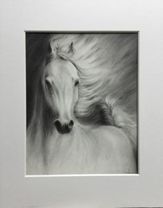 Equine Drawing 2