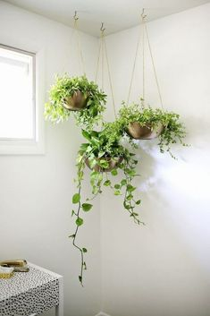 22 pretty indoor hanging plants ideas to decorate your home 1