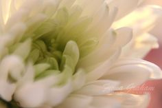 love macro flower photography - it's such a fine art! from fionagraham