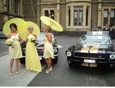The Mustangs in Black 1966 GT Convertible and Shelby GT350 Convertible Ford Mustangs out for a wedding.
