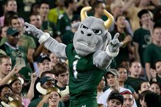University of South Florida's Rocky the Bull - USF Tampa!