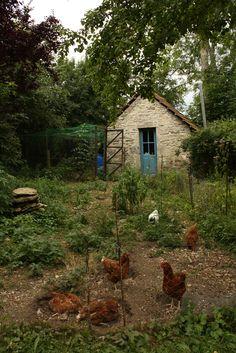 chickens! France 2012 | Flickr - Photo Sharing!