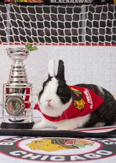 This would be a great picture if it wasn't the Blackhawks!