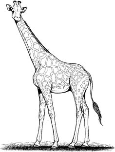 Pictures of giraffe drawing for kids - Easy Drawings Sketches, Easy Drawings For Kids, Drawing For Kids, Giraffe Heart, Cute Giraffe, Giraffe Coloring Pages, Coloring Pages For Kids, African Giraffe, African Animals