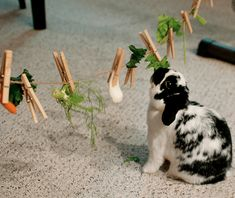 8 Cool Games to Play with Your Pet Rabbit - Bond with Your Bunny - Kaninchen Diy Bunny Cage, Diy Bunny Toys, Bunny Cages, Diy Toys For Rabbits, Rabbit Toys, Pet Rabbit, House Rabbit, Lionhead Rabbit, Rabbit Life