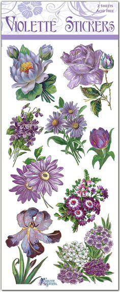 C62-Purple-Garden