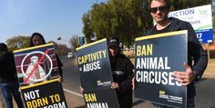 animal activists - Google Search