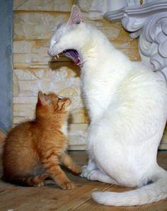 Милые и забавные животные