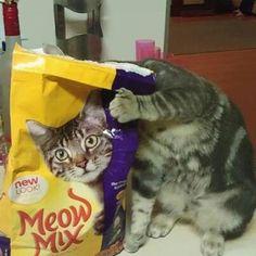 Astucieux le chat !