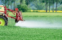 """Ökologe über Pestizide: """"Sie werden nicht dran sterben"""" - Unternehmen - derStandard.at › Wirtschaft"""