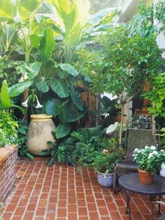 garten ideen Take Advantage of Texture Big, bold tropical plants create a lush feel. Their large leaves can change the scale of a small space to help it feel larger. (Plus, many tropical plants are super cool! Small Courtyard Gardens, Small Courtyards, Small Backyard Gardens, Small Backyard Landscaping, Garden Spaces, Small Gardens, Outdoor Gardens, Landscaping Ideas, Backyard Patio