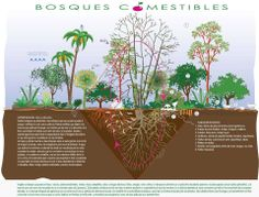 Bosques comestibles.                                                       …