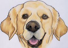 golden retriever nose drawing | Monthly Archives: March 2007