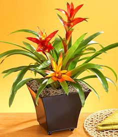 Foolproof houseplants on pinterest sunlight low lights and leaves - Indoor colorful plants ...