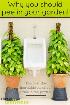 Discover the incredible benefit of peeing in the garden. | Rodale Wellness