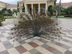 www.journeys-travel.com/ | Gorgeous Grounds to walk around on!  Peacock | #peacock #resort