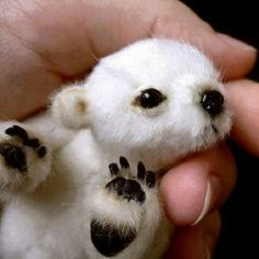 Oso polar recién nacido.