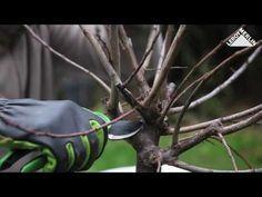 Cum se taie pomii fructiferi? Toaletare pomi fructiferi- Ghid video Leroy Merlin Romania - YouTube
