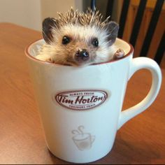 Omg hedgehog and timmies :-P  What more could a person want :-P